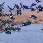 انجام اقدامات پیشگیرانه جهت جلوگیری از شیوع آنفولانزای فوق حاد پرندگان در شهرستان خدابنده